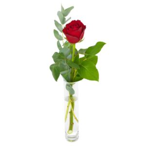 En enkel röd ros och gröna blad. Skicka den med ett blomsterbud från Euroflorist!