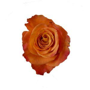 Ros. Orange. Välj antal själv. Ett alternativ hos Interflora.