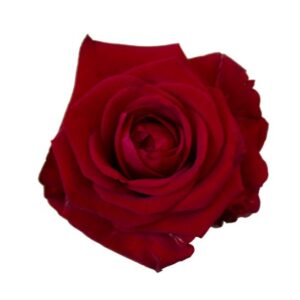 En lång, röd ros. Välj själv antal rosor du vill skicka! Alternativet finns hos Interflora.