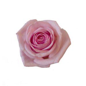 Rosa ros. Välj själv hur många rosor du vill skicka. Ett alternativ hos Interflora.