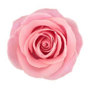 Rosa ros - skicka tre, fyra, fem eller sju rosor med bud via Florister i Sverige