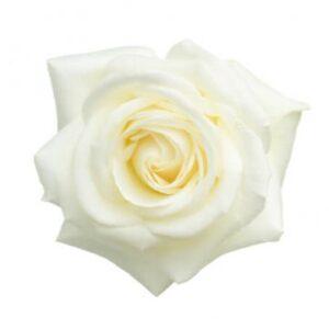 Vit ros, Florister i Sverige. Välj mellan buketter med tre, fyra, fem eller sju vita rosor.